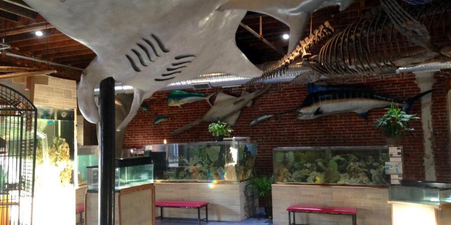 World Aquarium wedding St. Louis