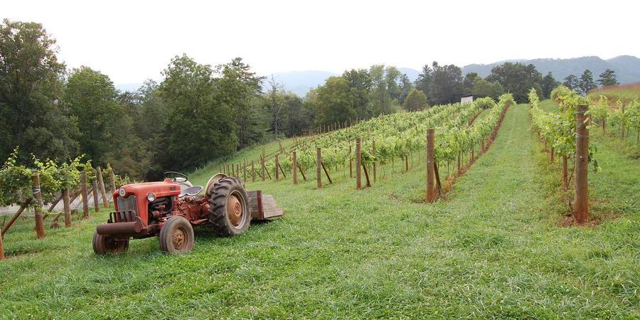 Addison Farms Vineyard wedding Asheville