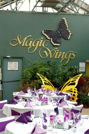 Magic Wings Butterfly Conservatory wedding Western Massachusetts