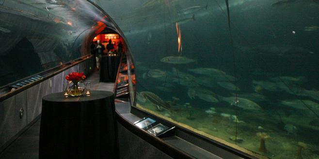 Aquarium of the Bay wedding San Francisco