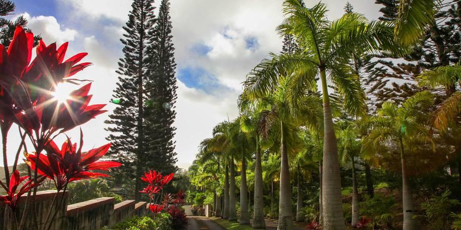 Hale Ikaika wedding Oahu