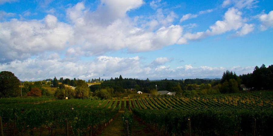 Plum Hill Vineyards wedding Portland
