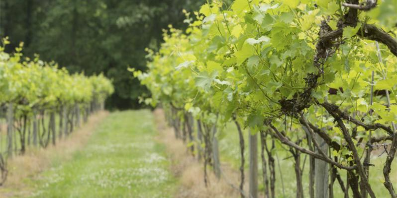 Hidden Brook Winery wedding Northern Virginia