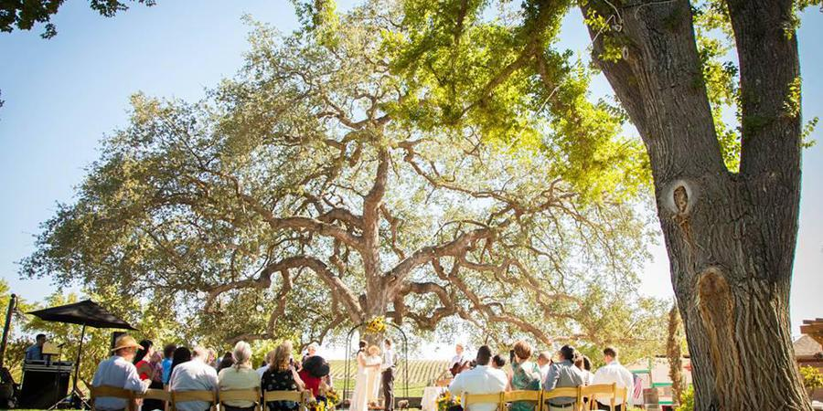 Pomar Junction Vineyard and Winery wedding Central Coast