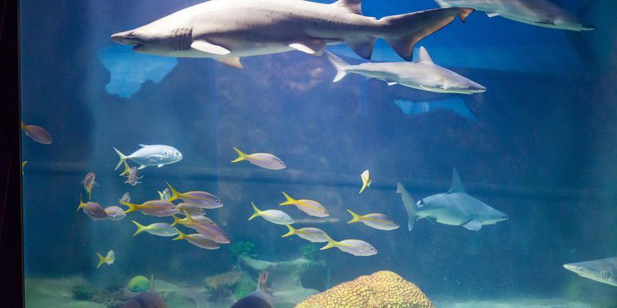 Greater Cleveland Aquarium wedding Cleveland