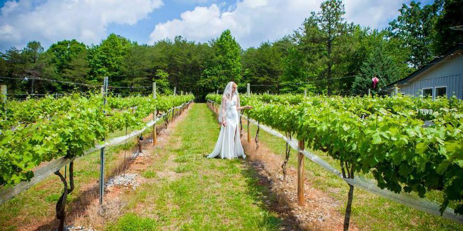 Sharp Mountain Vineyards wedding Atlanta