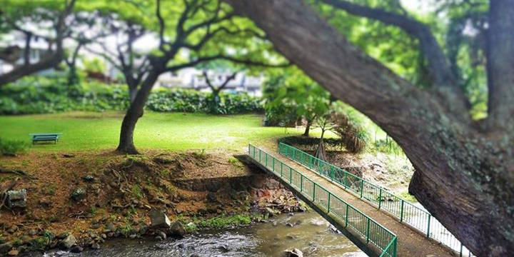 Lili`uokalaniBotanical Garden wedding Honolulu