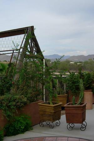 El Encanto Dos wedding Phoenix/Scottsdale