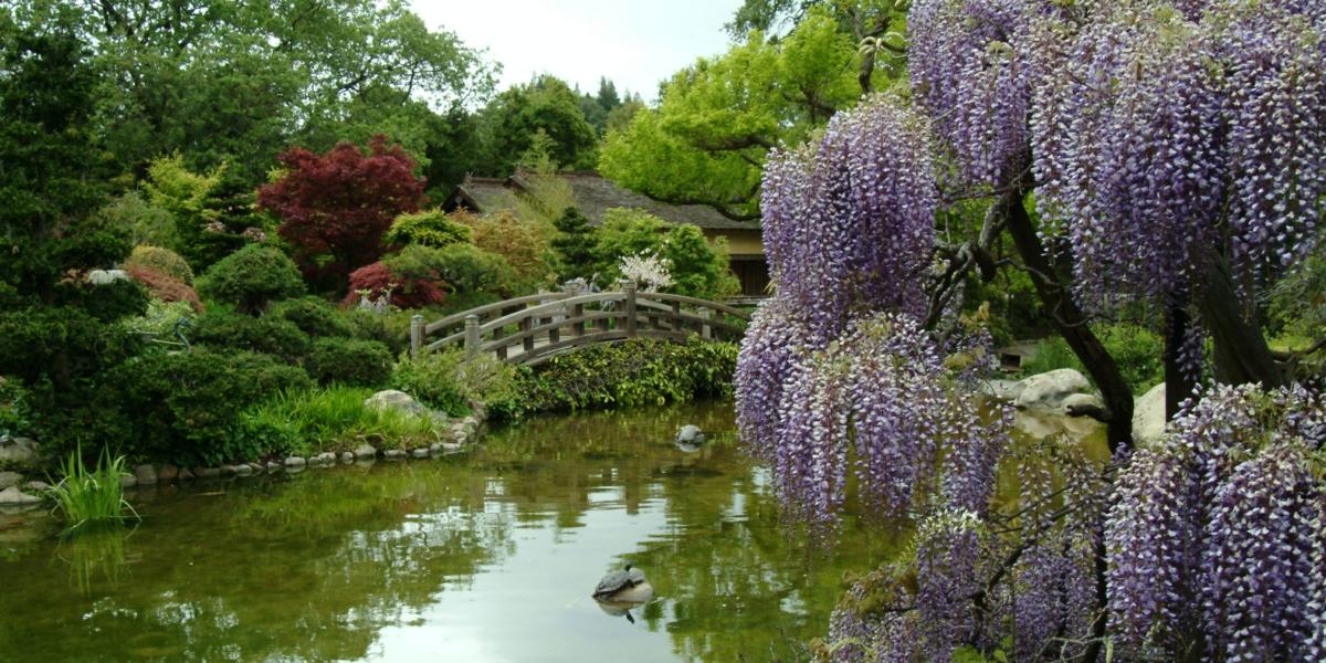 hakone estate and gardens weddings in saratoga ca