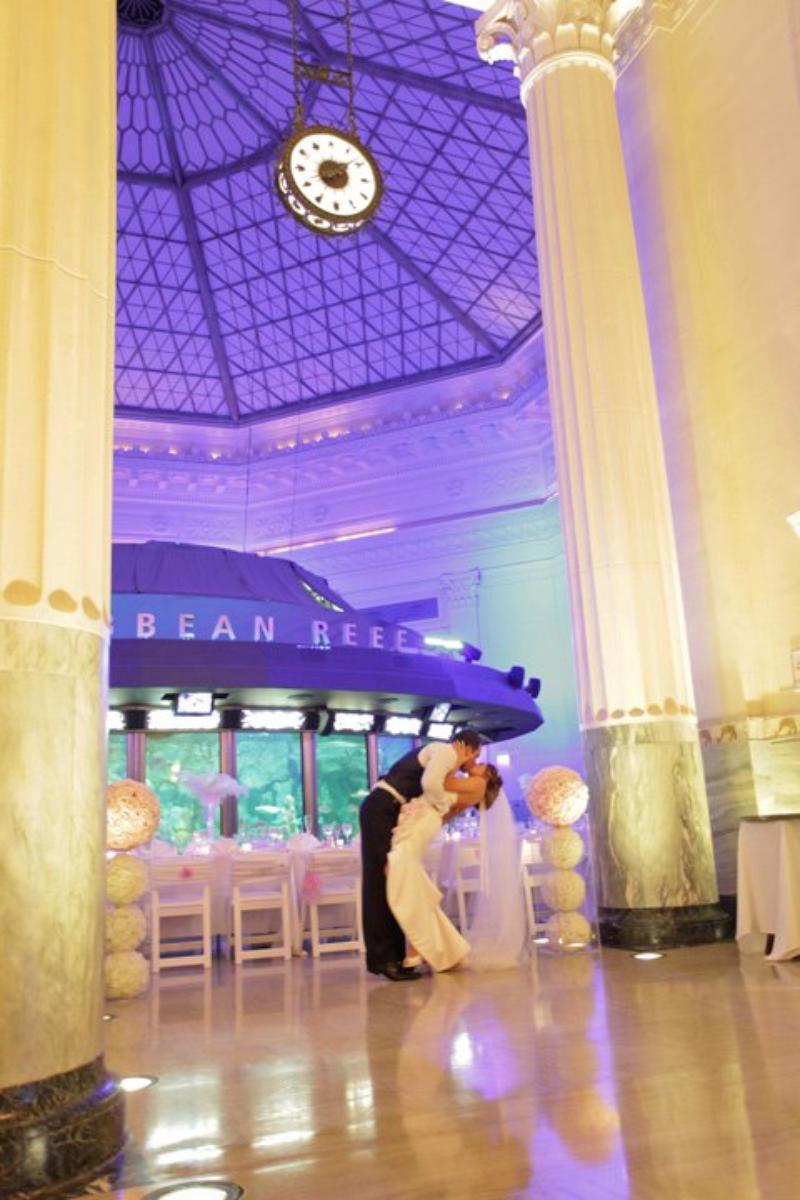 Shedd Aquarium wedding venue picture 14 of 16 - Photo by: Robyn Rachel Photography