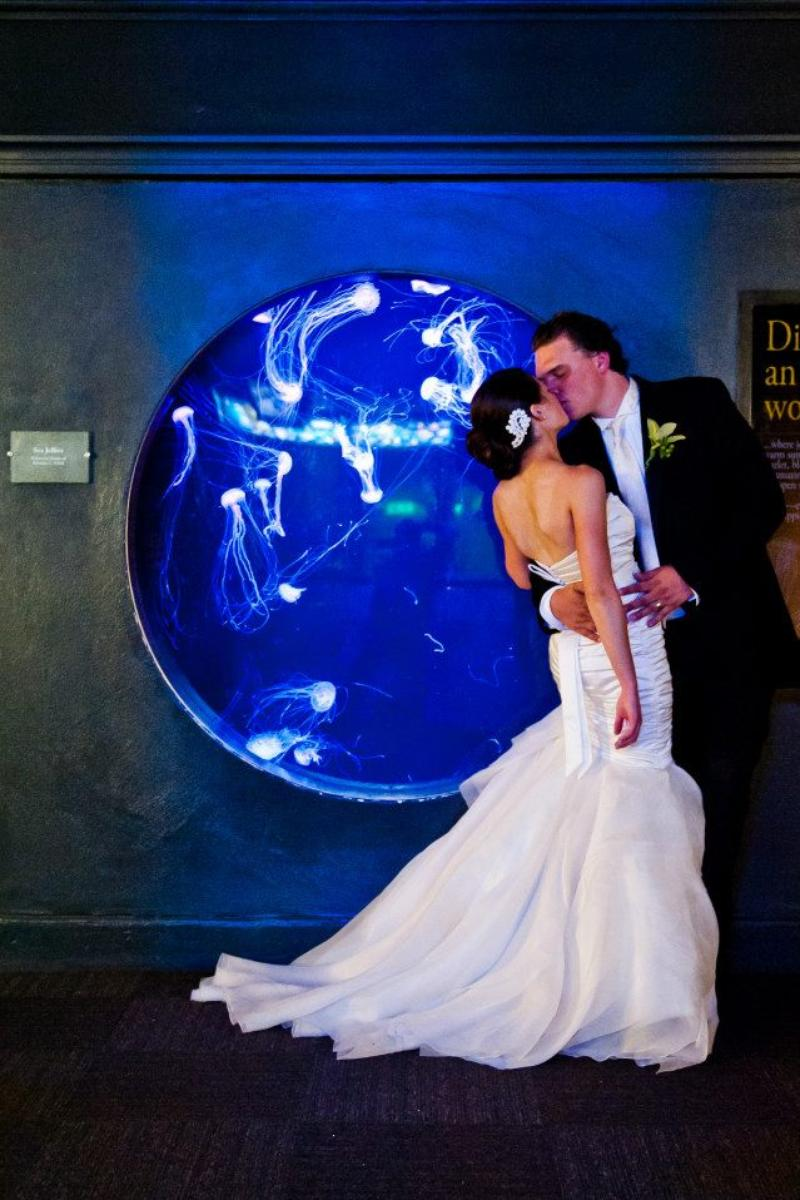 Shedd Aquarium wedding venue picture 15 of 16 - Photo by: Matushek Photography