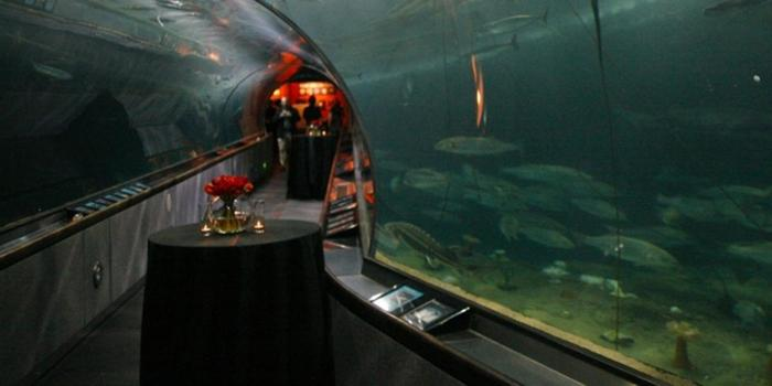 Aquarium Of The Bay Weddings Get Prices For Wedding