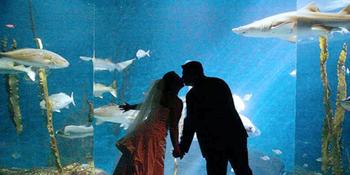 Maritime Aquarium at Norwalk weddings in Norwalk CT