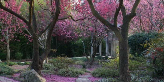 Shinzen Friendship Garden Weddings