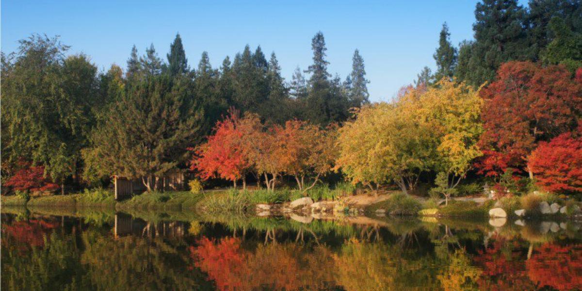 Shinzen Friendship Garden Weddings In Fresno Ca