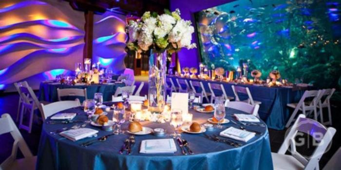 seattle aquarium wedding venue picture 15 of 16 provided by seattle aquarium