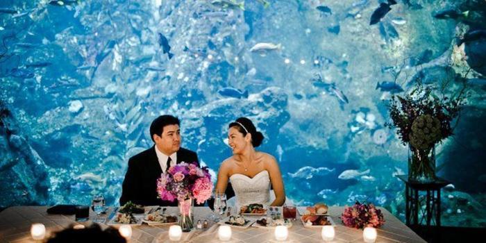 Seattle Aquarium Weddings Get Prices For Wedding Venues