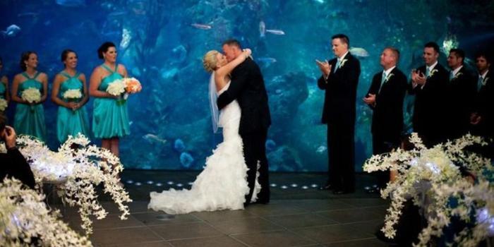 seattle aquarium wedding venue picture 10 of 16 provided by seattle aquarium