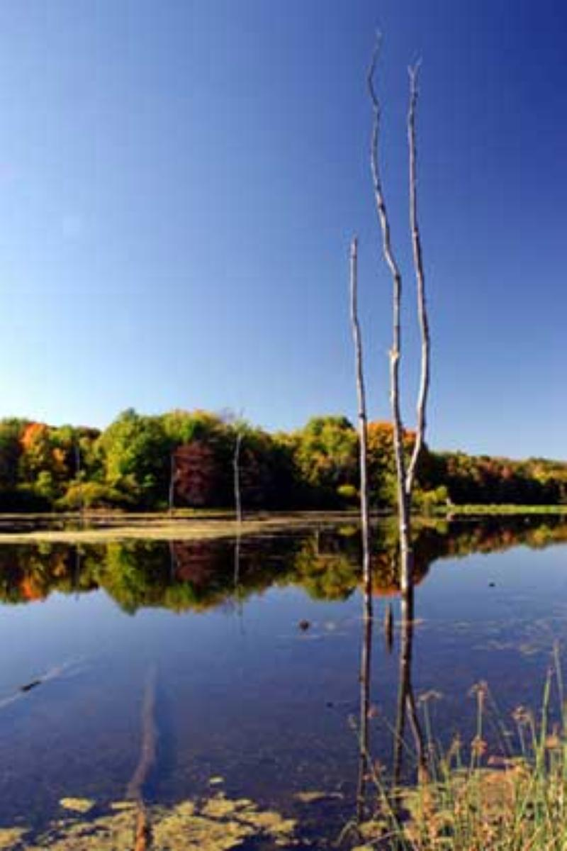 Beartown Lakes Reservation Geauga Park District Weddings
