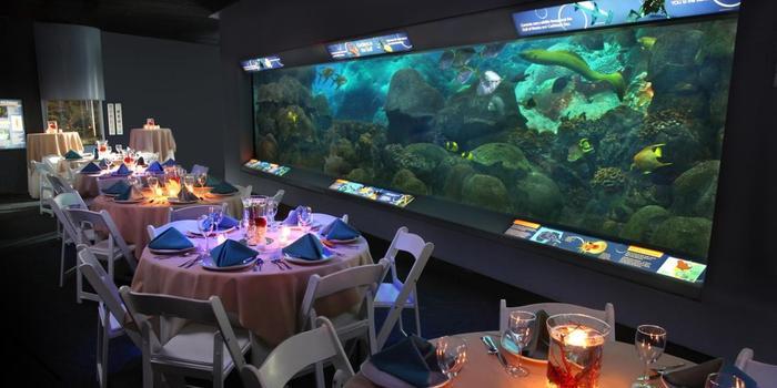 texas state aquarium wedding venue picture 5 of 8 provided by texas state aquarium