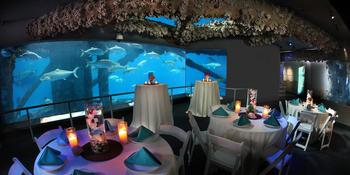 texas state aquarium weddings in corpus christi tx