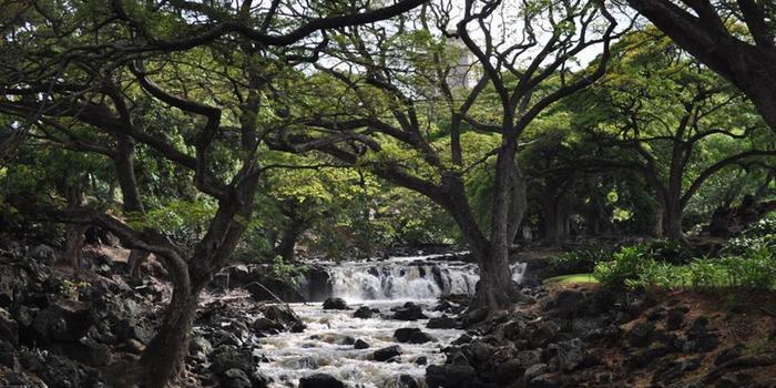 Foster botanical garden weddings get prices for wedding venues in hi for Foster botanical garden honolulu