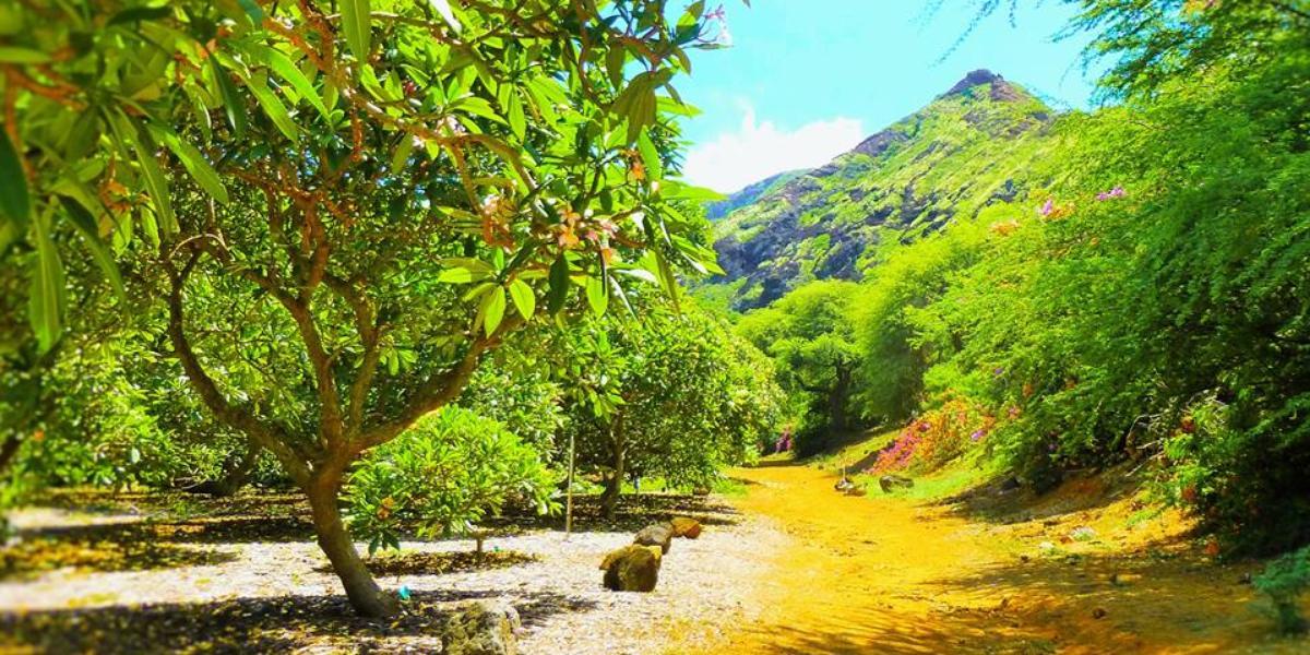 Koko Crater Botanical Garden Weddings Get Prices For Wedding Venues