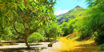 Click Here To See More Details About Koko Crater Botanical Garden