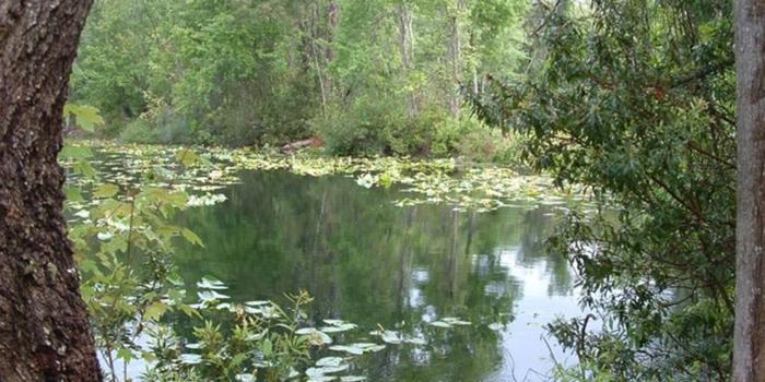 Jacksonville arboretum gardens weddings get prices for - Jacksonville arboretum and gardens ...