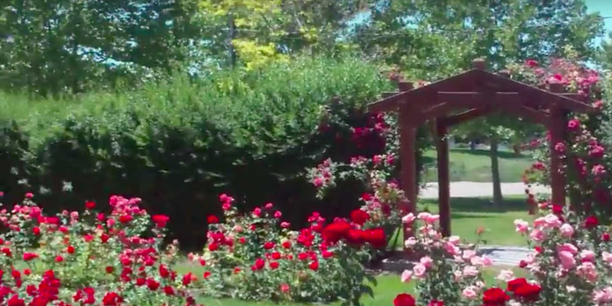 Nampa City Rose Garden Weddings Get Prices For Wedding