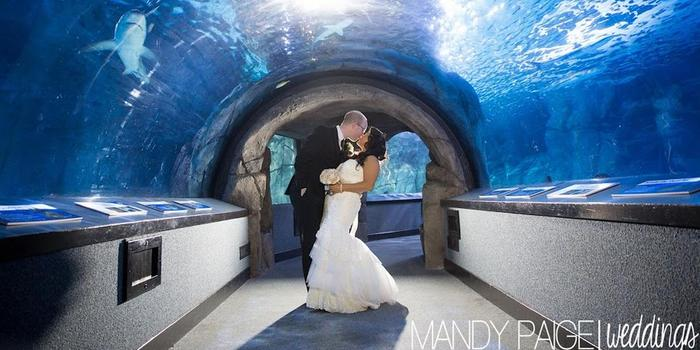 Newport Aquarium wedding venue picture 10 of 11 - Photo by: Mandy Paige Photography