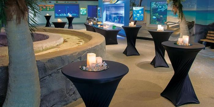 Newport Aquarium wedding venue picture 2 of 11 - Provided by: Newport Aquarium