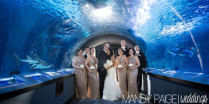 Newport Aquarium wedding venue picture 6 of 11 - Photo by: Mandy Paige Photography