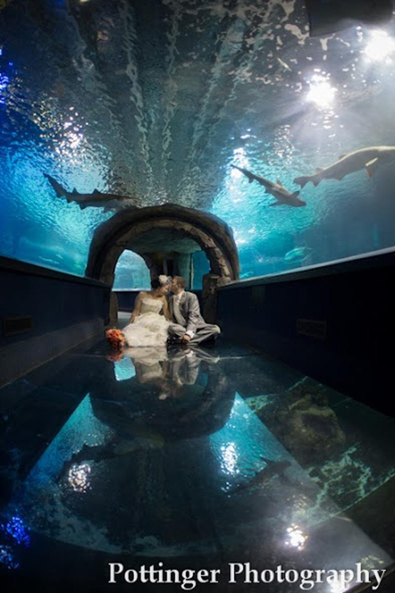 Newport Aquarium wedding venue picture 7 of 11 - Photo by: Pottinger Photography