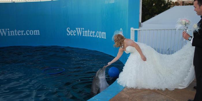 Florida Beach Wedding With Aquarium Reception: Clearwater Marine Aquarium Weddings