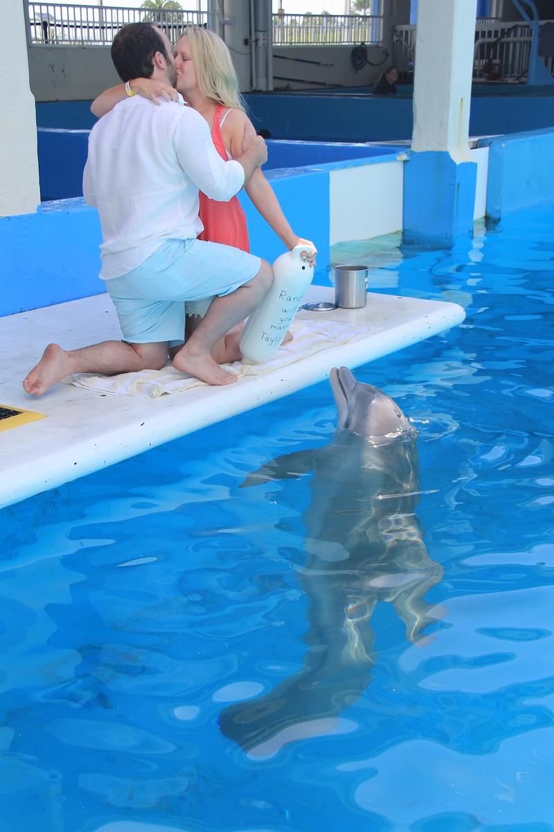 Clearwater Marine Aquarium Weddings Get Prices For
