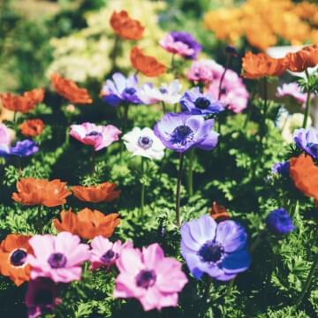 Park/Garden