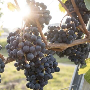 Winery/Vineyard/Brewery